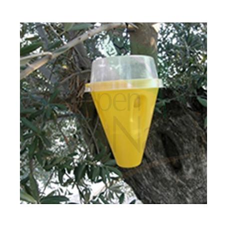 Captura masiva mosca del olivo CONETRAP