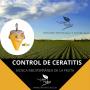 CONETRAP CERATITIS 180 DIAS