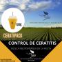 CERATIPACK - Captura masiva mosca de la fruta ( CERATITIS)