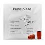 Prays oleae