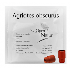 Agriotes obscurus