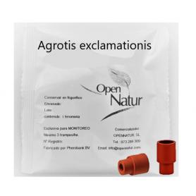 Agrotis exclamationis